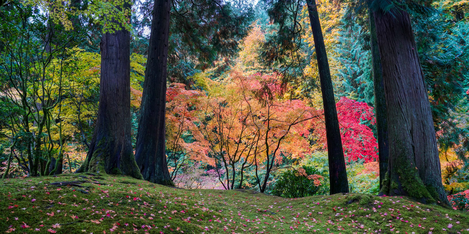 Fall Colors HD-20191022- by Chris Ruggles-11