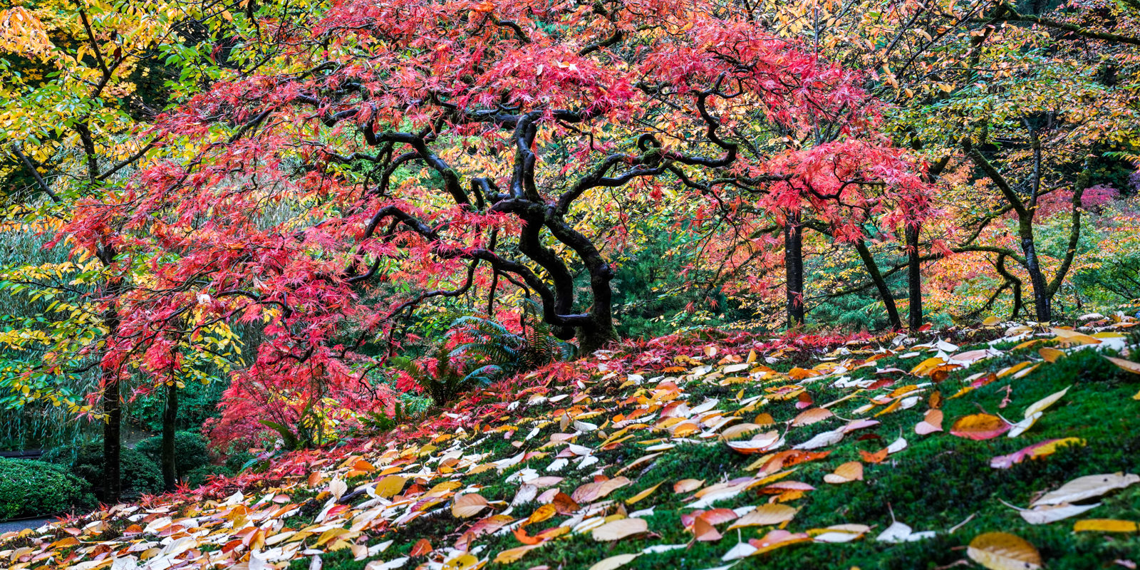 Fall Colors HD-20191022- by Chris Ruggles-22