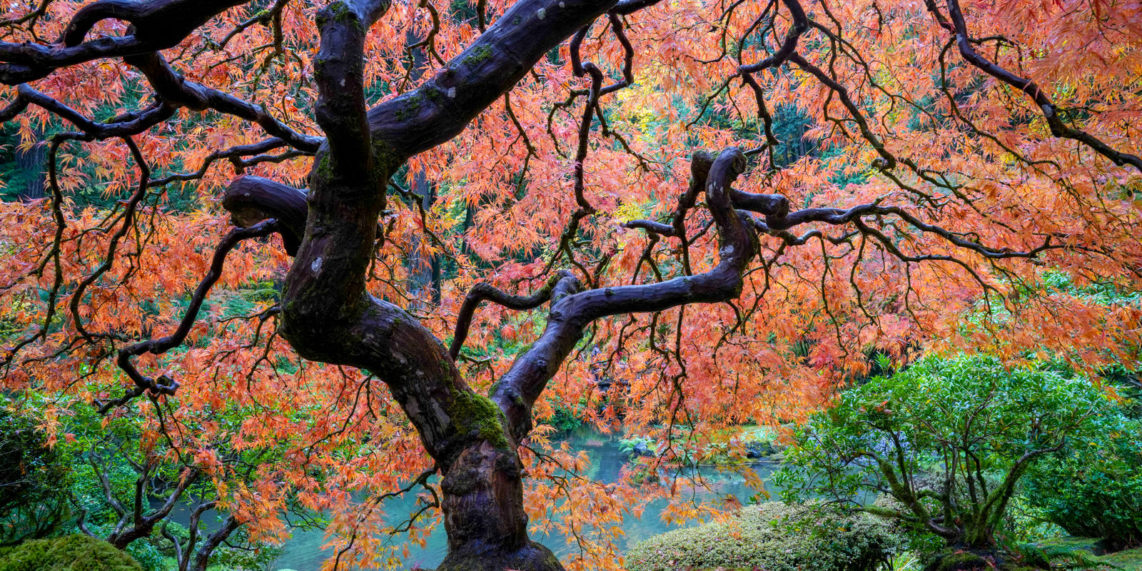 Fall Colors HD-20191022- by Chris Ruggles-8