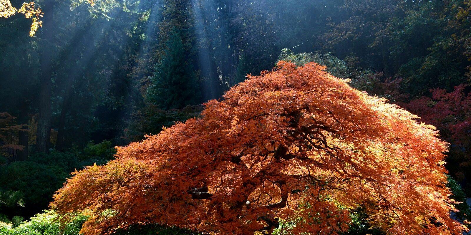 Resize_Glowing Tree by Nina P