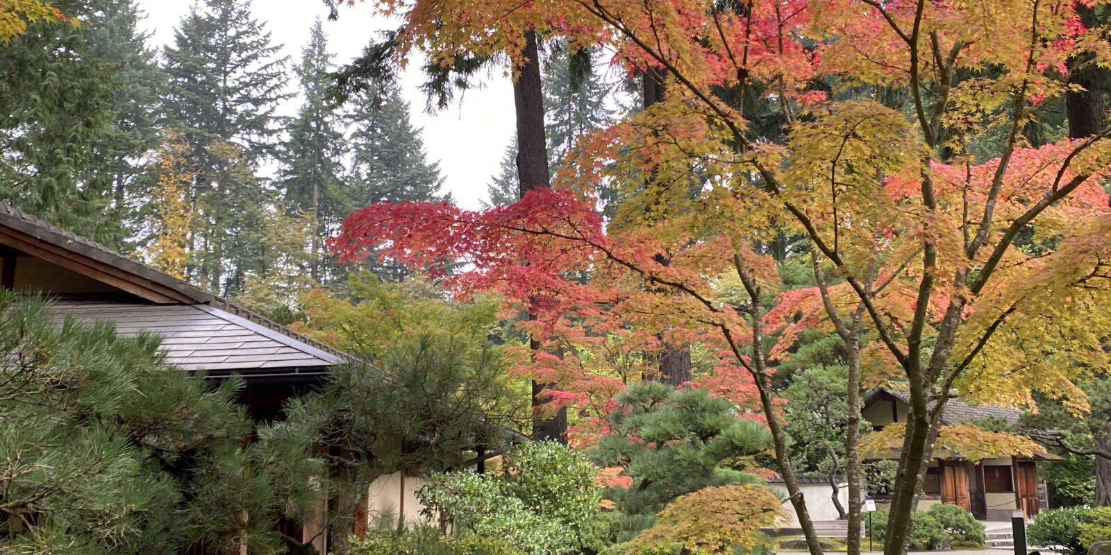Photo Oct 29, 10 30 14 AM