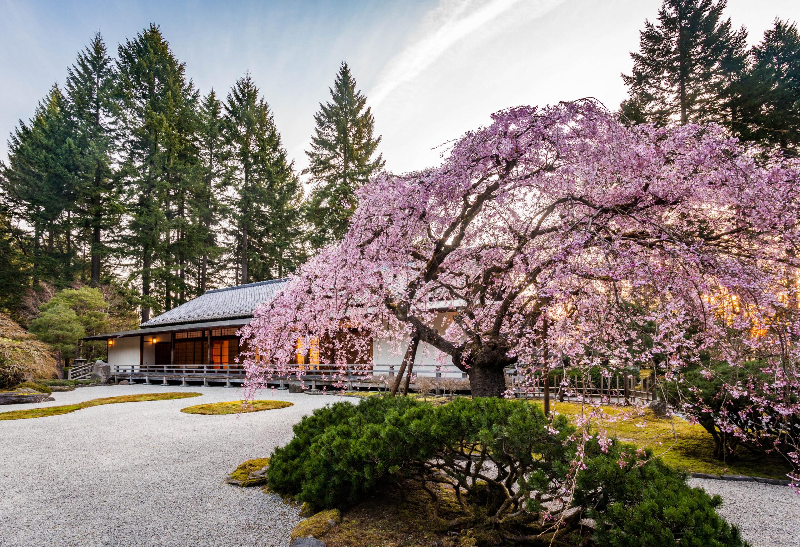 Cherry Tree-2014-03-24-Jonathan Ley-13x19
