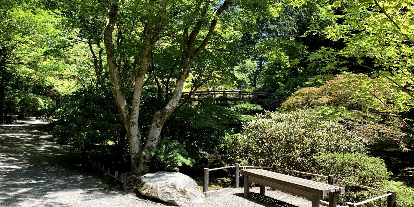 Summer shade and bench at portland japanese garden